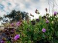 desert flowers near Magdalena 061800